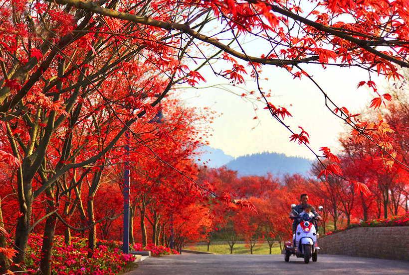 red leaves in Ba`nan district